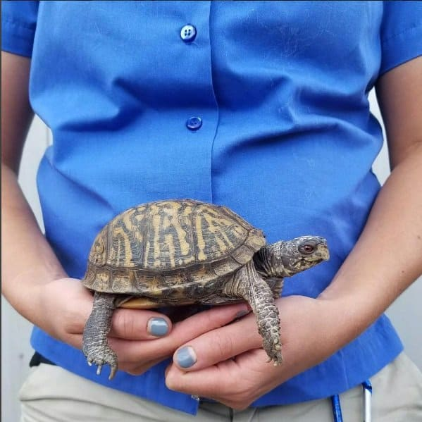 Com 22 semanas o bebê tem o mesmo tamanho dessa tartaruga