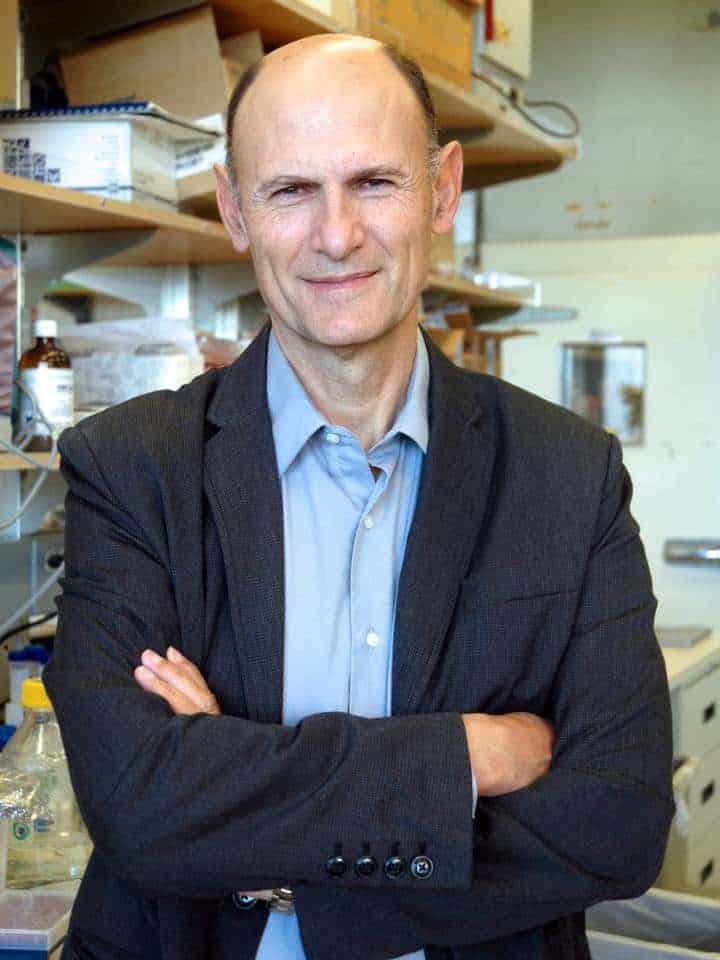 Cientista que criou bebê híbrido de humano e macaco