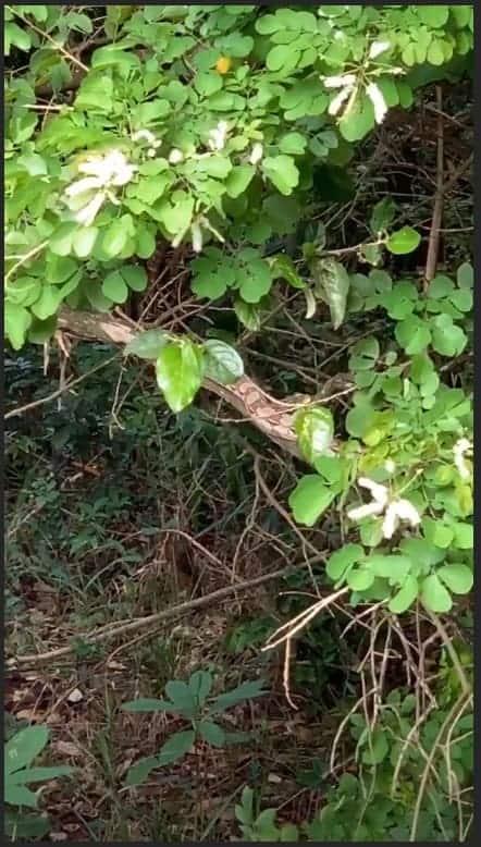 A futura mamãe Claudia Leitte se deparou com esta cobra selvagem no seu quintal