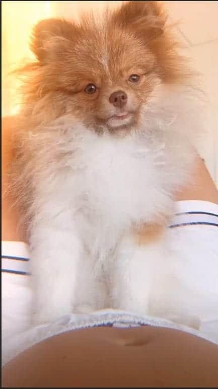 Momento fofura: Claudia Leitte com sua cachorrinha e sua linda barriga de grávida