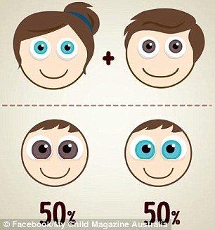 Olhos azuis e olhos castanhos
