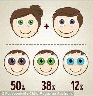 Olhos verdes e castanhos