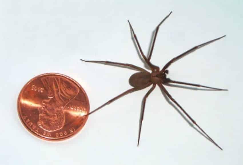 Essa imagem mostra uma aranha semelhante a que picou Kendall