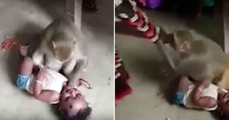 Outro bebê menino que sofreu ataque cometido por um macaco