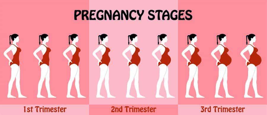 Confira o que uma mãe de primeira viagem precisa saber sobre a evolução da gravidez