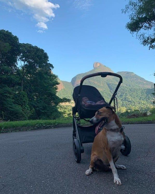 Bebê de Rafael Vitti e Tatá Werneck com um dos cachorros da família