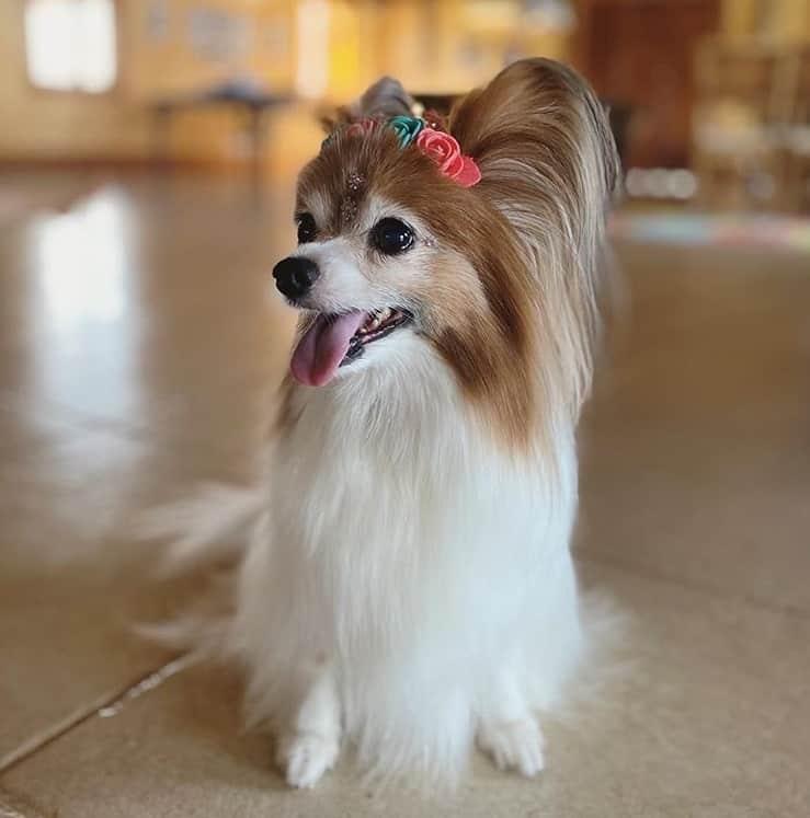 Sandy revelou esta foto de sua cachorrinha