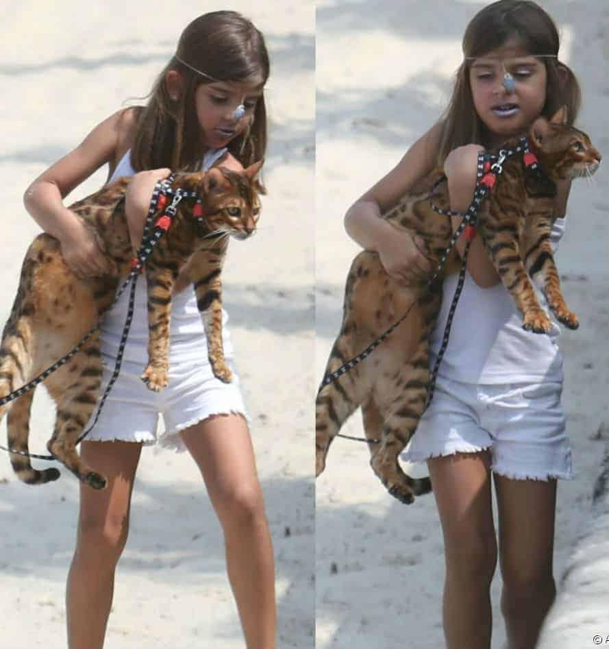 A pequena Sofia ganhou um gato da mãe a atriz Grazi Massafera