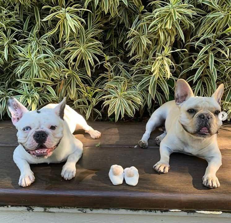 Shtefany Brito anunciou a gestação com uma foto de seus pets
