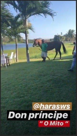 Dom ganhou esse lindo cavalo do papai Wesley Safadão