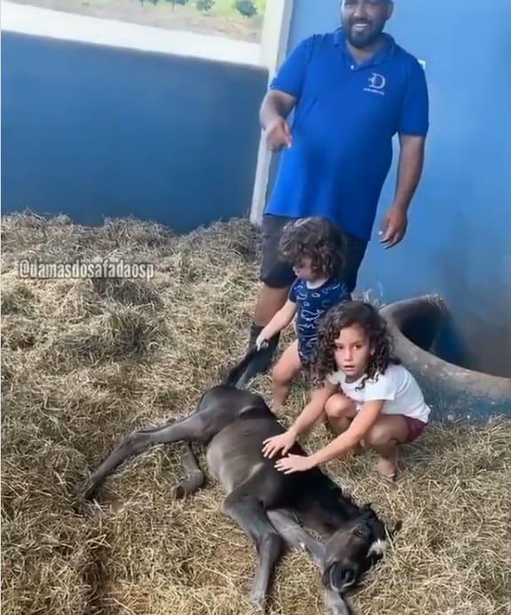 Filhos de Wesley Safadão com um cavalo recém-nascido
