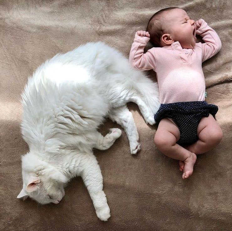 A bebê de Nathalia Dill com seu gatinho