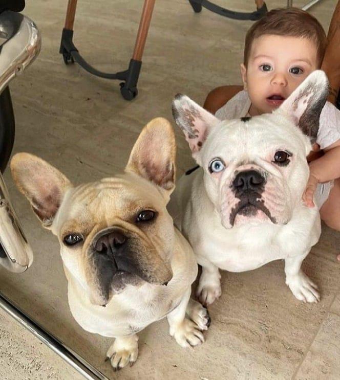 Sthefany Brito mostrou o filho com os dois pets