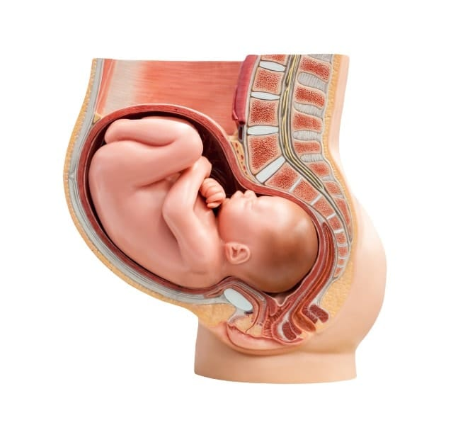 A posição cefálica do bebê pode influenciar no tipo de parto
